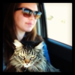 Captain the amazing road trip cat!